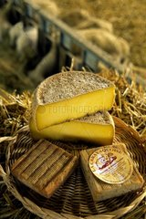 Cheese of goat to the saffron Quercy France