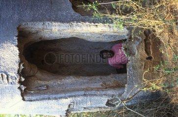 Homme dans abri creusé dans baobab Madagascar