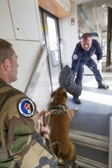 Training with the biting decoy in a train SNCF - France