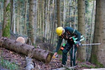 Cubic timber on a logging - Vosges France