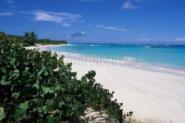 Plage de sable blanc sur l'île de Culebra Porto Rico