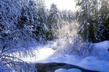 Brumes matinales sur une rivière au Québec Canada