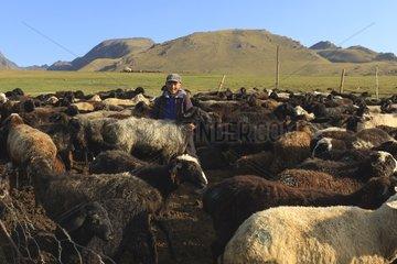 Kyrgyz boy and sheep - Kyrgyzstan