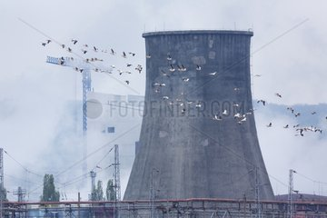 Great White Pelicans in flight and cooling tower - Bulgaria