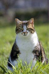 Cat sitting in grass Franche-Comte France