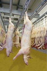 Carcasses de porcs en chambre froide à l'abattoir