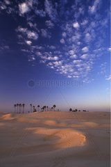Palm Trees in the dunes of a sandy desert Douz Tunisia