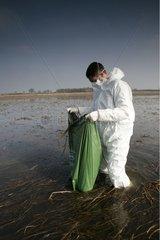 Technicien récoltant un cadavre d'oiseau peut-être infecté