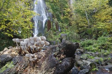 Parachute Mushroom and Nideck waterfall - Vosges France