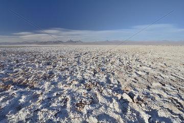 Salar de Atacama  near San Pedro de Atacama  II Antofagasta Region  Chile