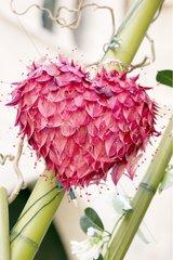Composition végétale en forme de coeur