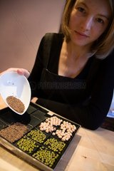 Sowing of seeds in a sprouting tray