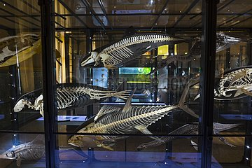 Natural history museum of Belin - Germany