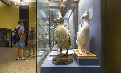 Dodo at Natural history museum of Belin - Germany