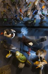 Birds at Natural history museum of Belin - Germany