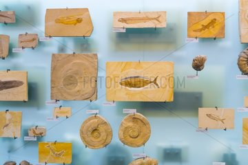 Fossils at Natural history museum of Belin - Germany