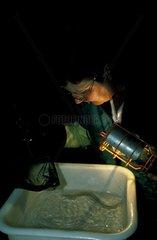 Inspection sanitaire d'un élevage scientifique de Protées