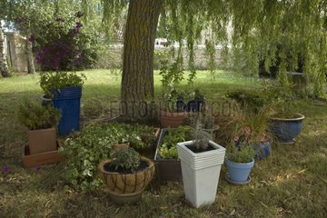 Gathering all the plants in pot in the shade