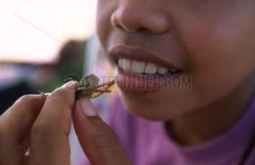 Girl eating a locust roasted Kampuchea