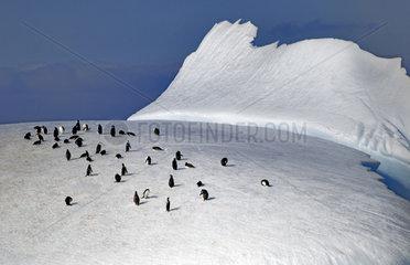 Chinstrap penguins (Pygoscelis antarcticus). Antarctic Peninsula.