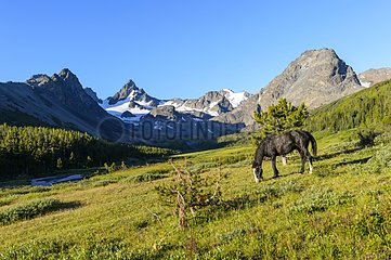 Quarter Horse in Valley - Park Tsylos Rockies Canada