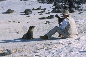 Jeune Lion de mer des galapagos face à touriste Galapagos
