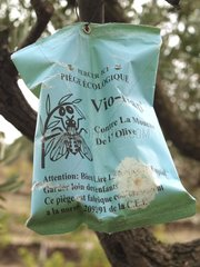 Fly trap in a Olive grove in southern France