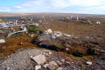 Village paleo eskimo in ruins on Bathurst Island Canada