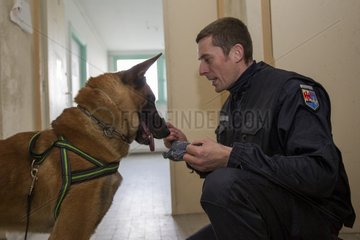 Dog training in search of drugs - France