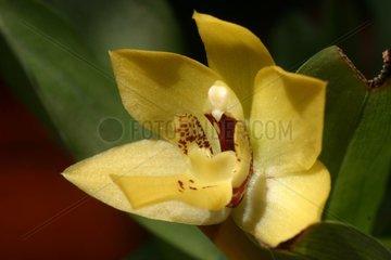 Exotic orchid flower Côtes-d'Armor France