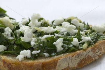 Bruschetta in Mozarella with Garlic and the Greenery France ]