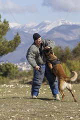 Training with the biting decoy - France