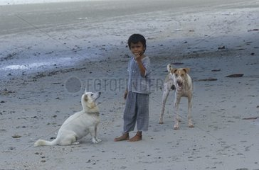 Child playing with two dogs on a beach Thailand