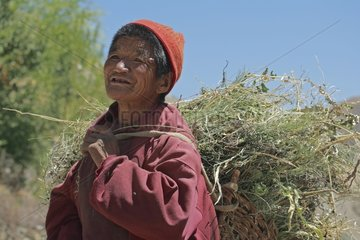 Ladakhi farmer coming back from fields with a hood India
