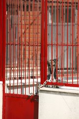 Spanish greyhound waiting to be killed in a pound Spain