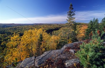 Boreal Forest in Autumn - Algonquin Provincial Park Canada