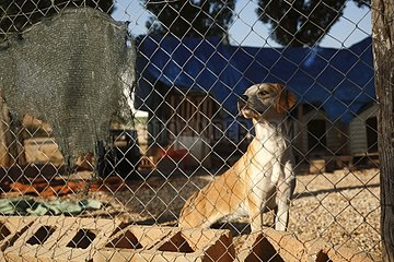 Dog crossed behind a fence in a shelter Cuenca Spain