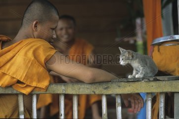 Kitten sitting with with dimensions of a buddhist monk Kampuchea