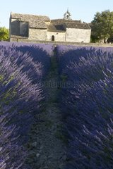 Romance church of Solérieux and field of lavender France