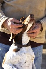 Man caressing his dog France
