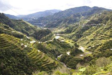 Rice fields of Bontoc Ifugao Province Philippines