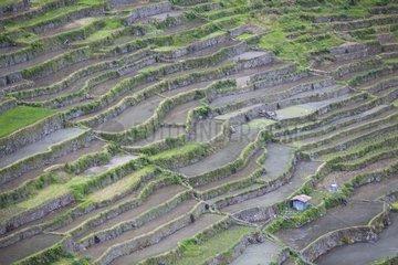 Rice fields of Batad Ifugao Province Philippines