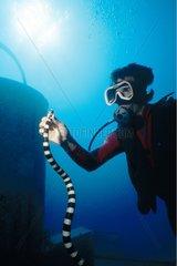 Plongeuse tenant un serpent de mer
