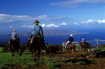 Group of cowboys riding in a ranch Maui Island Hawaii
