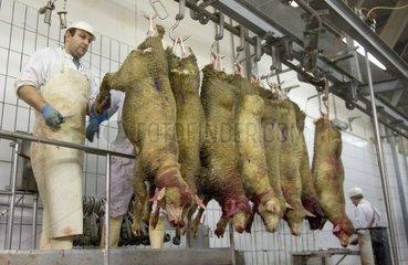 Dépeçage de moutons en abattoir