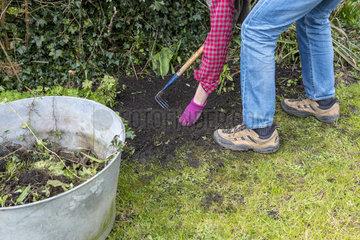Manual weeding of the garden in the spring  Pas de Calais  France