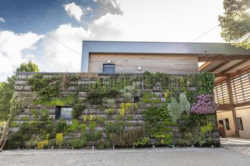 Green wall on a building  summer  Pas de Calais  France