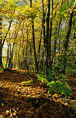 Forest in autumn  France