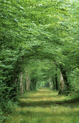 Forest in summer  France