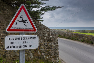 Sign announcing the crossing of amphibians to motorists  La Hague  Normandy  France